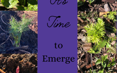 It's Time to Emerge